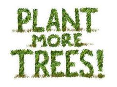 Plant trees metairie