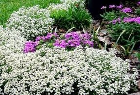 Landscape cleanup with annuals , mulching in metairie