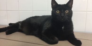 Chance is a sweet black cat!