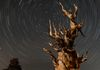 "Ancient Bristlecone Tree - To find out how this was taken, go to the page named ""The Methuselah Tree, NOT!"""