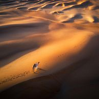 sunset desert landscape fine art photo ahmad alnaji professional landscape photographer in Dubai