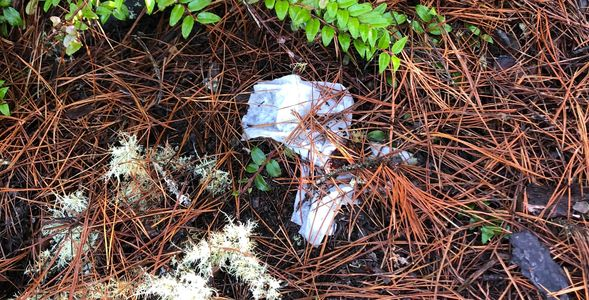 Toilet paper waste, pack it out, hiking trails, all trails