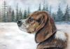 "Commissioned, ""Tracker"" 11 x 14 Pastel, Susan Pettit, $600 unframed, Private Collection."
