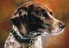 """Bryden"" Commissioned Pastel, 11 x 14 by Susan Pettit, $600 unframed."