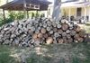 cut up tree and stacked - tree service lafayette