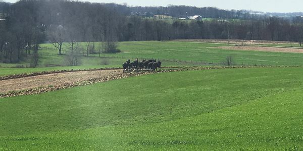 Over looking the Amish fields across from the campground.