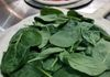 Getting our Spinach Pizza ready