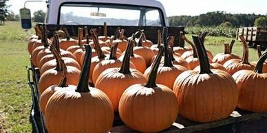 Our Bennett Farms truck is loaded down with field trip pumpkins.