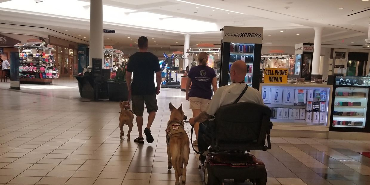 Service Dog in Training Tina with Air Force Veteran Chris, Service Dog Sarge with Army Veteran Dale