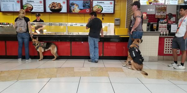 Service Dog Artemis  and Service Dog in Training Damon help their veterans navigate the food court.