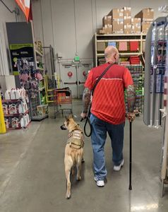 Service Dog Sarge helps his veteran Dale navigate a big box store.