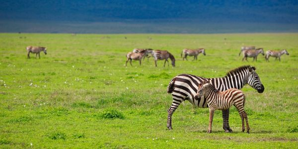 Value Travel and Tours 5-Night Tanzania Digital Detox Safari. Perfect for visitors to Tanzania.