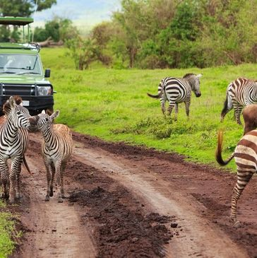 Value Travel and Tours 13-Night Kenya and Tanzania Digital Detox Safari - perfect for first timers