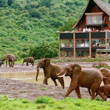 Value Travel and Tours 7-Night Kenya Digital Detox Safari. Perfect for first time visitors to Kenya.
