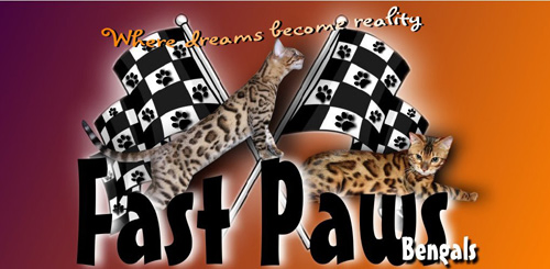 Fast Paws Bengals