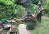 Hedge & Stump Removal