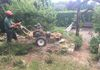 Hedge & Stump Removal - Stump Being Ground Away