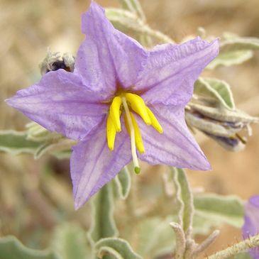Nevada Weed Management Association
