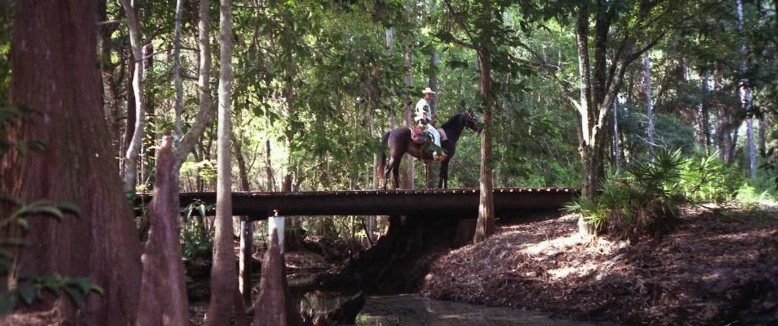 A man riding a horse on a bridge over a creek in the forest.