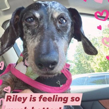 Riley came to us with an eye injury which we fixed.  She still has some medical issues.