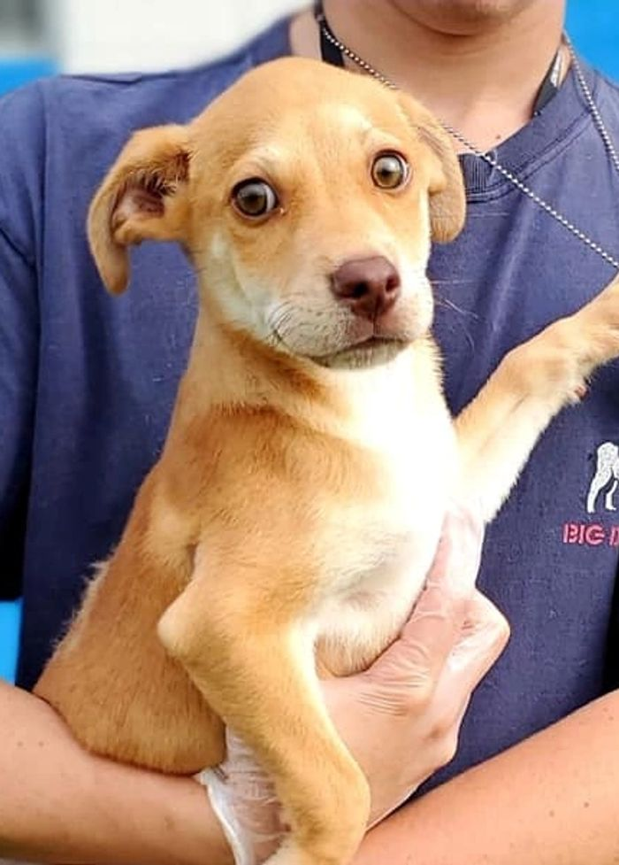 Dingo is an 8 lb mixed breed little boy. Only two months old, available for adoption!