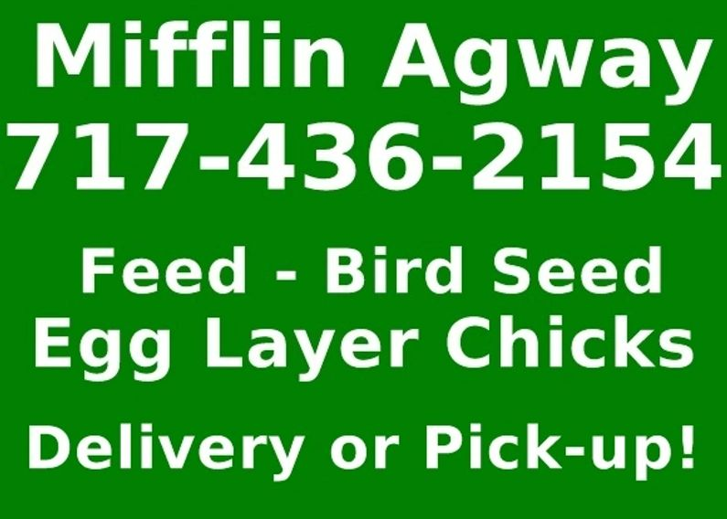feed, bird seed, poultry