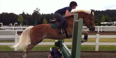Haflinger pony and rider are jumping a fence during training.