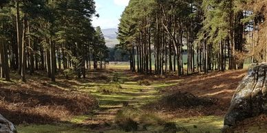 Picture from Saint Cuthberts Cave, Northumberland