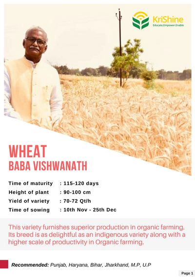 Wheat - Baba Vishwanath
