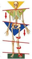 Whole body postural link and cause and effect