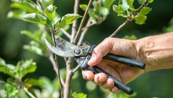Pruning and landscape support maintenance by LANDDescapes, LLC Landscape Design Contractor