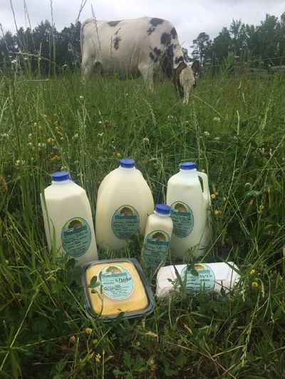 Fresh milk in a field with Freckles. cow farm local organic herd share