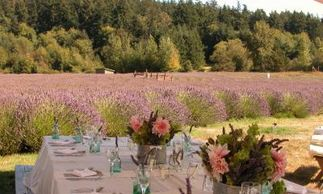 Pelindaba Lavendar Farm Weddings venue Islands Weddings and Events
