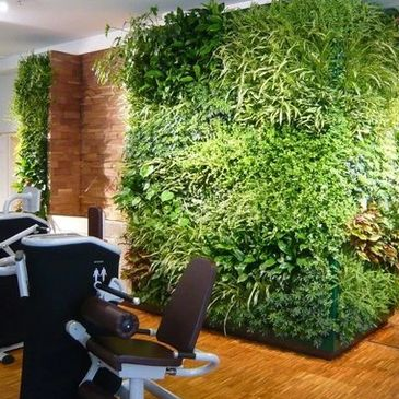 Interior Greenwall in a Sports Facility with Green tropical plants on a wall