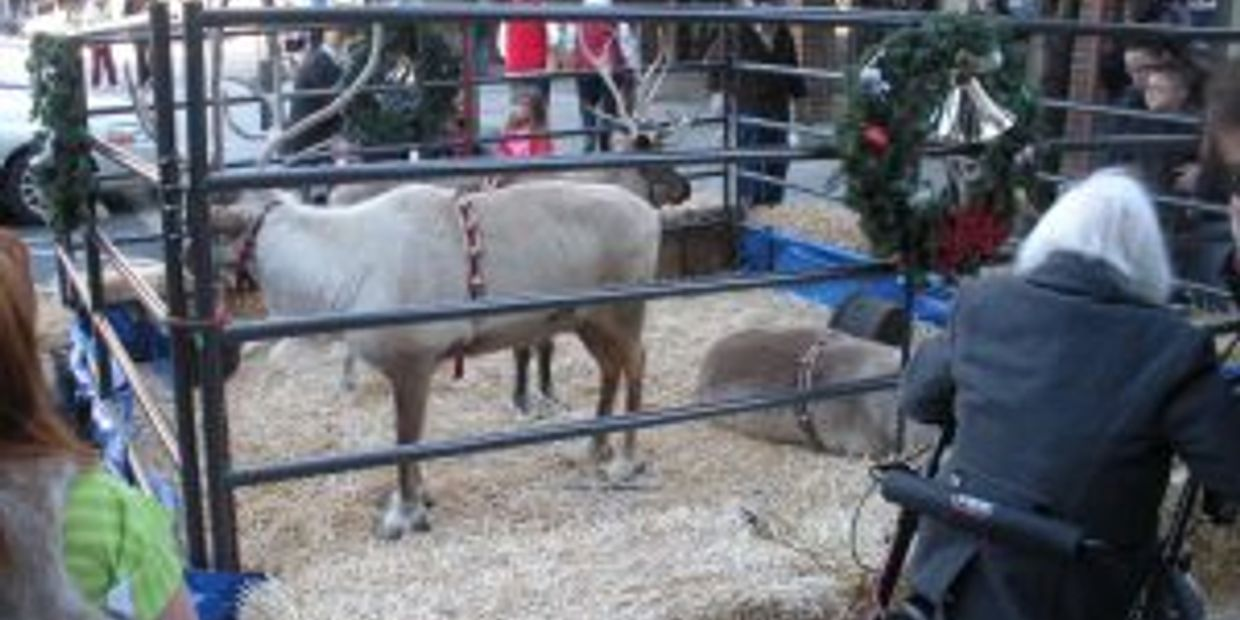 live reindeer, reindeer rentals, reindeer leases, tree lighting, holidays