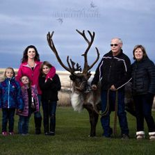 reindeer, reindeer guardians, family photos
