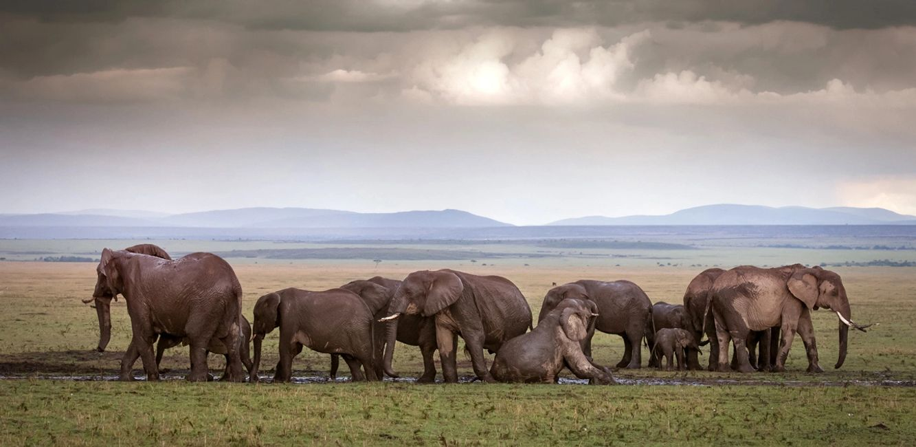 Private Luxury Wildlife and Cultural Journeys in Africa, Asia, India and South America.