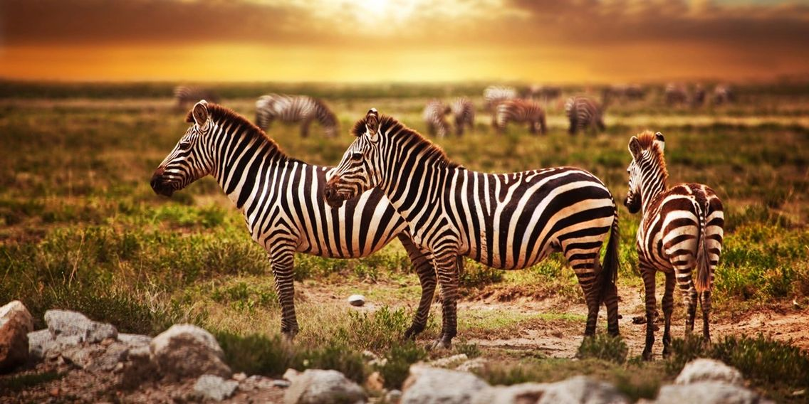 Luxury African Safari. Customize your Private Luxury Safari to Kenya. Migration Safari