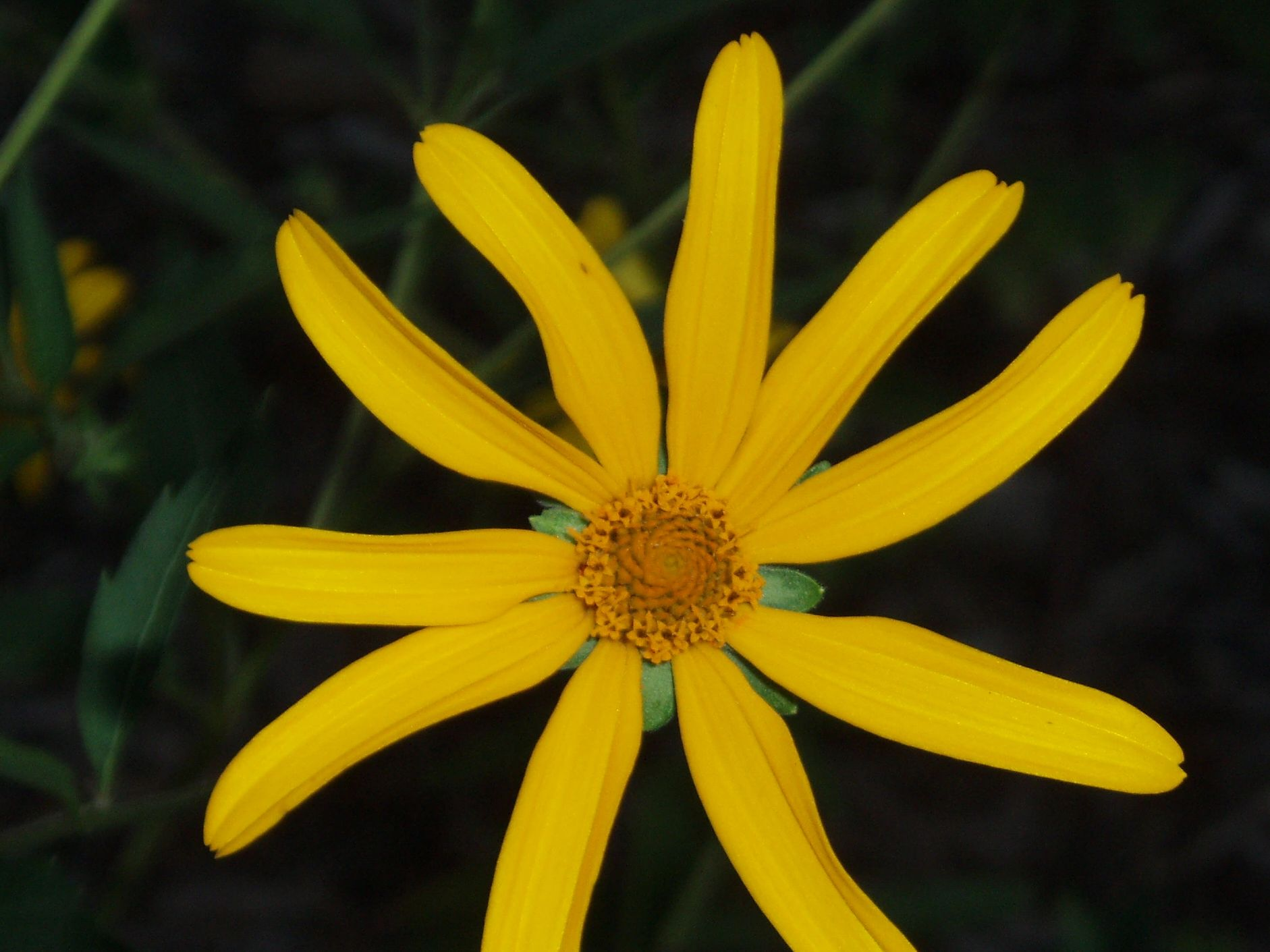 "{""blocks"":[{""key"":""6b0ci"",""text"":""Heliopsis helianthoides False Sunflower Oxeye Sunflower - potted plants email john@easywildflowers.com"",""type"":""unstyled"",""depth"":0,""inlineStyleRanges"":[],""entityRanges"":[],""data"":{}}],""entityMap"":{}}"