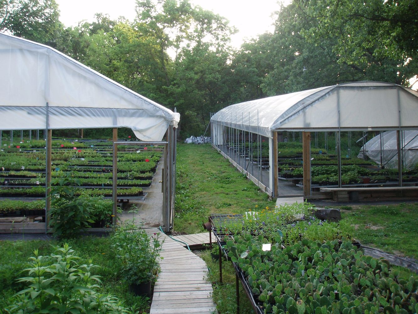 Greenhouses - Easywildflowers  Plant nursery Mail order Native Potted Plants Flowers Shrubs & Vines