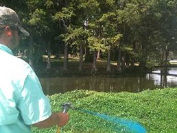 Overton Fisheries offers aquatic vegetation control in Texas Lakes & Ponds