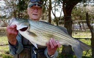 George Glazener with Trophy Texas Pond Raised Hybrid Striper stocked by Overton Fisheries