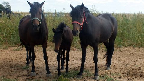 3 generations foundation mares