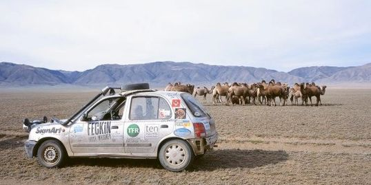 Nissan Micra with bactrian camels