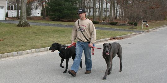 Training Two Great Danes