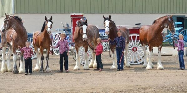 Junior Showmanship 2015