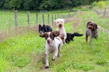 dog walking, group walks, dogs, pet care, pet services, pets, walking, dog boarding, dog holidays, holidays, walking, vets, dog training, dog grooming,