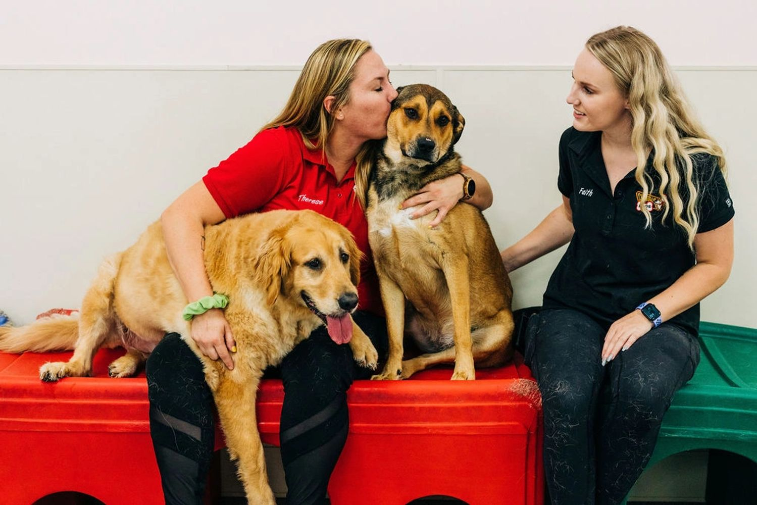 Dog daycare, dog boarding, Chandler Dogs, Gilbert Dogs, Glendale Dogs, Phoenix Dogs and Tempe Dogs