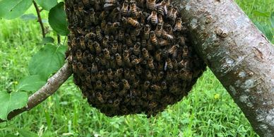 how to start beekeeping?
