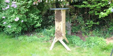 Honey bees moving into a Gardeners' Beehive swarm of bees on a natural tree beehive